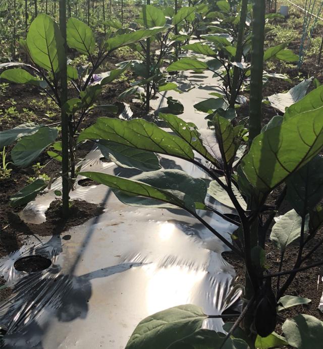 つくばのランチサラダバー。野菜は自家栽培もあります。